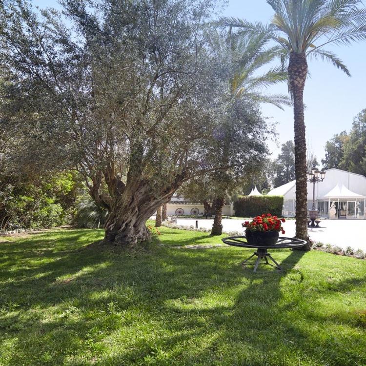 salon-ibiza-jardines-la-hacienda-2